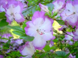In Bloom by sioranth