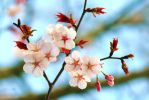 Blossoms - 7905 by Snuley
