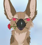 Have A Flower My Lovey Gal by Foxbat-Sullavin