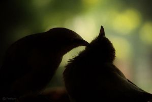 The love of babblers by Prabhjot-Singh