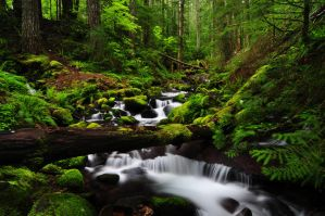 Parker Creek by greglief