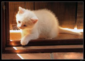 White Kitten 2 by floflo