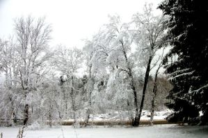 Snowed-covered Trees by lilsparkle2011