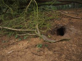 little animal cave / hole by Nexu4
