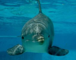 the smile of a dolphin. by annlo13