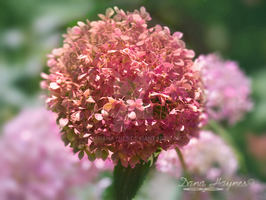 Spring Pink Flower Buds | Stock Graphics by DanaHaynes
