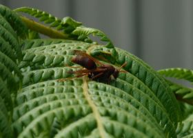 Brown Hornet on a Fern by Amazinadrielle