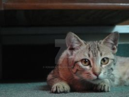 Adorable domestic cat. by KINAMATIX
