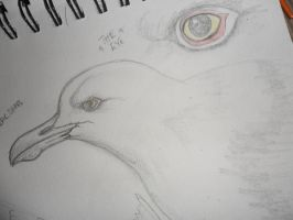 Sketch Herring Gull by PardonMyParadox