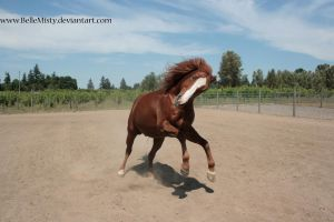 Horse Stock769 by BelleMisty