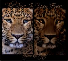 The Fire In Your Eyes - Before and After by ManifestedSoul