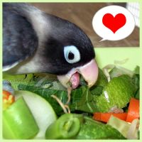 Pockymon loves his veggies by emmil