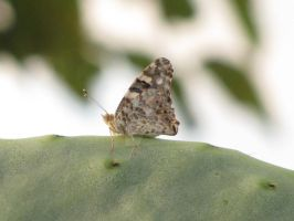 Happy On My Catus Leaf by Maltese-Naturalist