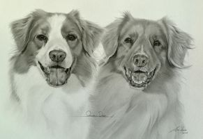 Commission - 2 Nova scotia duck tolling retrievers by Captured-In-Pencil