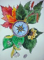 Compass by Arsenid