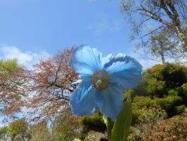 blue sky, blue flower by liznixXbakura