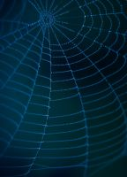 This spider by netherl