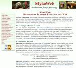 Link 4 Mykoweb by SmoothEyes