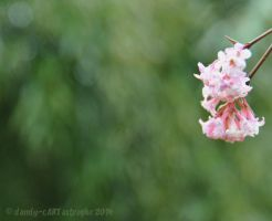 Shades Of February 50 by dandy-cARTastrophe