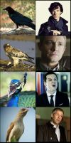BBC Sherlock: Bird Edition by OrminLange