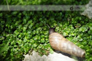 Caracol by ColorShoot
