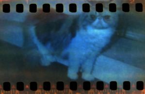 lomo meow by suite806