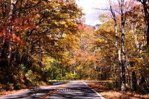 221 Highway in the Fall by Pi-ray
