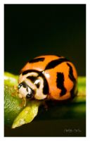 Lady Bug... Awww so very cute by willyyeo