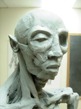 Head Ecorche Muscle by AriaIsato