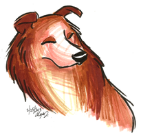 Brush Breeds-Rough Collie by NY-Stray