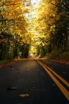 Fall Color in Oregon by pyro303