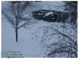 2010 5-6 02 Snow Pictures 05 by lilly-peacecraft