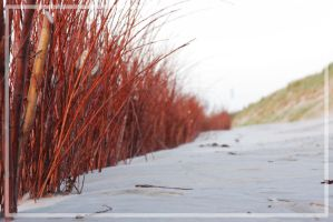 Red Branches by Drummyralf