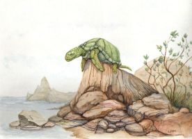 Old Man Turtle by LMMegyesi