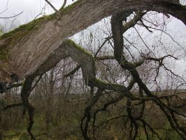 Moss-covered branches by Villainess-Vi