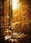 The Grace of Fall II by rekit