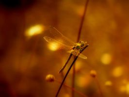 Insects 2 Dragonfly by slevendar