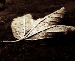 Leaf: by MateuszPisarski