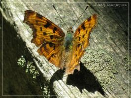 butterfly 02 by Isi-Daddy