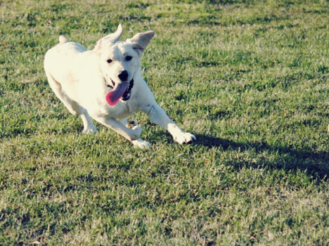 Marley In Action by kahlee-kat