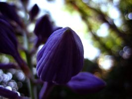 Purple Petals 2 by Holly6669666