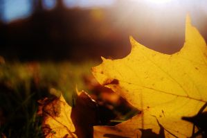 Fall Leaves 7 by nazzara