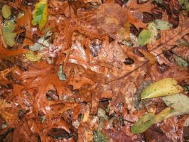 Wet Fall Leaves by Rubyfire14-Stock
