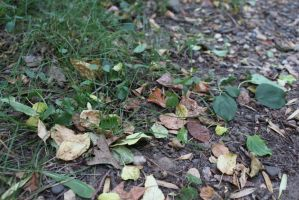 .The first leaves to fall. by decayedroses
