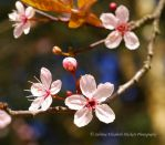 Mother Nature Blossoms by Hitomii