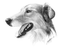 Dog portrait finished sketch by LadyArtaLot