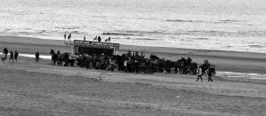 Horse outing on the beach. by pagan-live-style