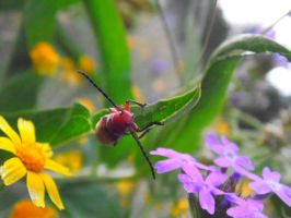 Red Insect 2 by TheGerm84
