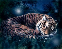 Tiger lullaby by areot
