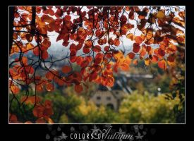 Colors of Autumn 6 by vikingexposure